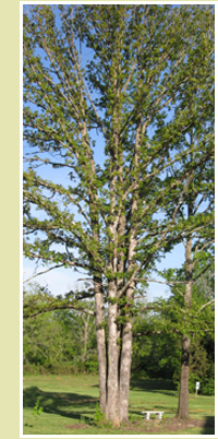 hm_tree